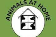 Animals At Home Nottingham