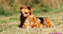 Meet Miss Pretty Pinky - help her promote the adoption of pets with special needs