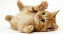 Ann & Bill's Cat and Kitten Rescue - Essex