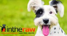 In The Raw - Online Raw Cat & Dog Food Store, Worthing, West Sussex