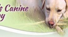 Kate's Canine Therapy - Staffordshire, Stoke-on-Trent and Cheshire