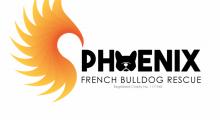 Phoenix French Bulldog Rescue