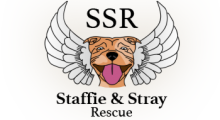 Staffie and Stray Rescue - Bournemouth