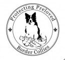 Protecting Preloved Border Collies