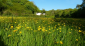 Mineshop Holiday Cottages - Bude, North Cornwall