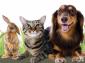 2Pure Pet Fresh Odour Eliminator